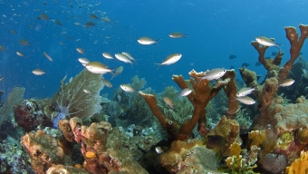 Collaboration to Save our Seas